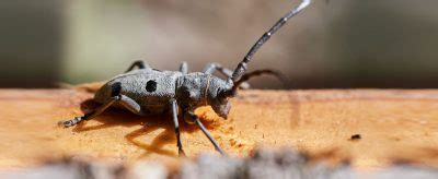 termite injection specialists woodworm pest control