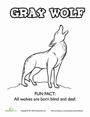 preschool wolf coloring pages gray wolf fun fact coloring page worksheet education com
