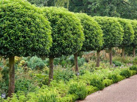 25 best ideas about evergreen trees on pinterest