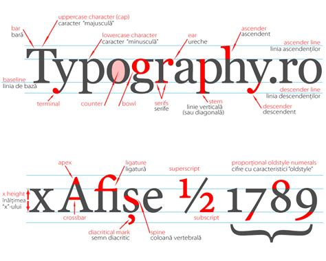 typography terminal type anatomy research lorenashleigh