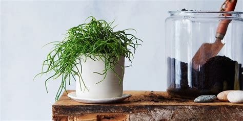 indoor plant dying 7 common houseplant afflictions and how to cure them all
