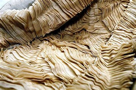 How To Make Paper From Plant Fibers - pia fiber a resilient plant for tastes ecouterre