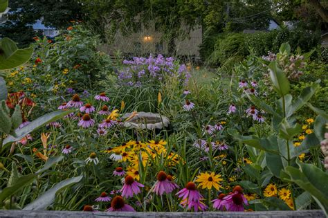 coneflower companion plants tips on companion planting with echinacea