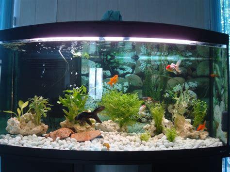 d 233 coration aquarium poisson japonais
