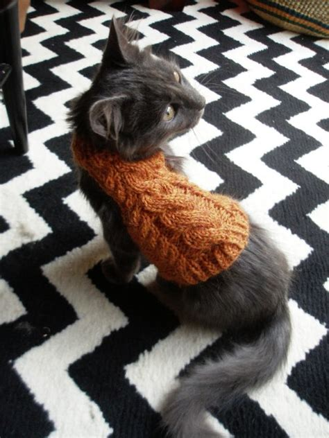 knitting pattern cat clothes cat wearing sweater tumblr