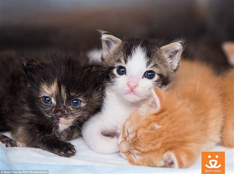 shelters in utah kittens rolled up in blankets at best friends sanctuary in salt lake city daily