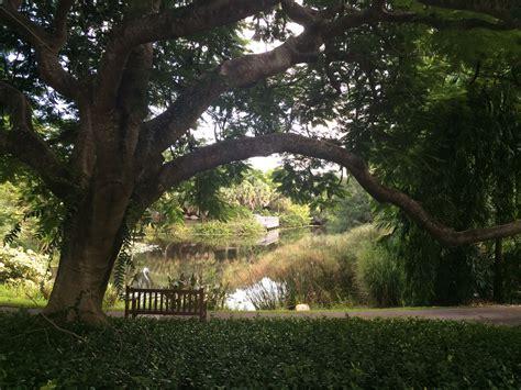 west palm botanical garden mounts botanical garden in west palm orlando sentinel