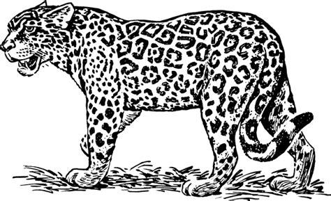 jaguar 4 clip at clker vector clip