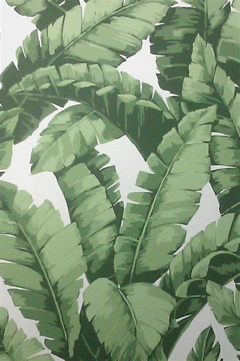 Banana Plant Wallpaper | banana tree wallpaper project tiki bar pinterest