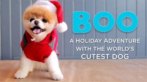 boo the dog christmas boo the world s cutest meets santa in new abc news