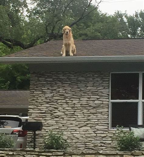 dog on a roof family makes sign to explain why their dog is on the roof