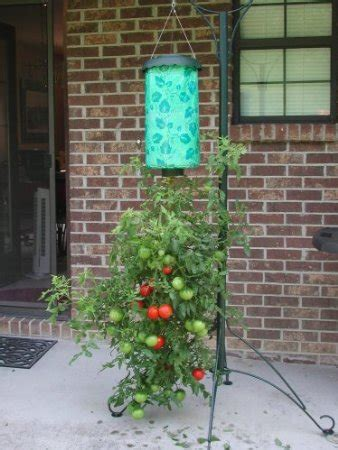 topsy turvy tomato planter diy topsy turvy tomato 174 planter one thing by jillee