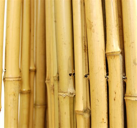 How To Make A Bamboo L bamboo fence 190 quot d x 6 h x 8 l