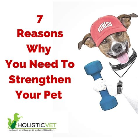 7 Reasons To A Pet by 7 Reasons Why You Need To Strengthen Your Pet Holisticpet