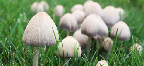 backyard mushrooms dogs dog dies after eating mushrooms in owner s yard the dogington post
