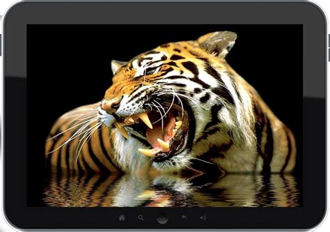 google images tiger tiger wallpapers android apps on google play
