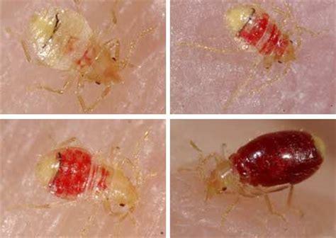 wax science des vies sexuelles abominables la punaise