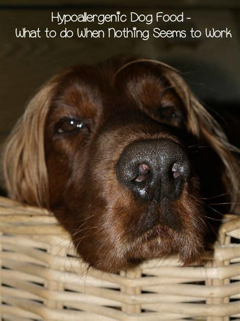 hypoallergenic puppy food hypoallergenic food when nothing seems to work