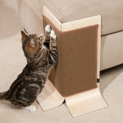 Has Your Cat Focused Her Scratching Efforts On Your