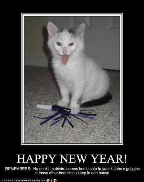 new years eve captions a few new year lolcats the on my genes