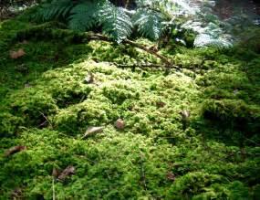 rainforest forest floor autos post