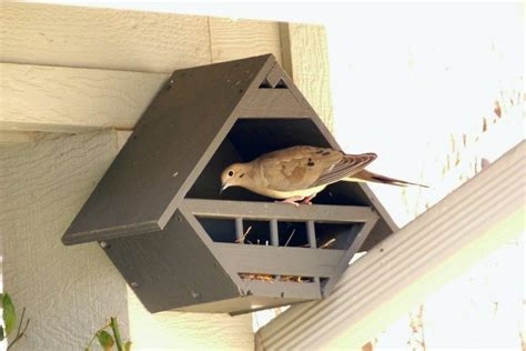 Mourning Dove Bird House Plans Archives New Home Plans Mourning Dove House Plans