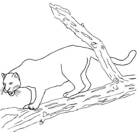 Black Jaguar Coloring Pages | black panther coloring pages coloring pages