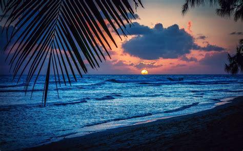 untamed sunset in the caribbean hd wallpaper hd wallpapers playa noche puesta del sol nubes hojas el mar caribe