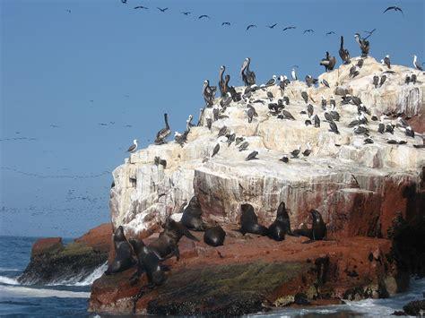 candelabro de paracas peru file islas ballestas paracas national reserve peru