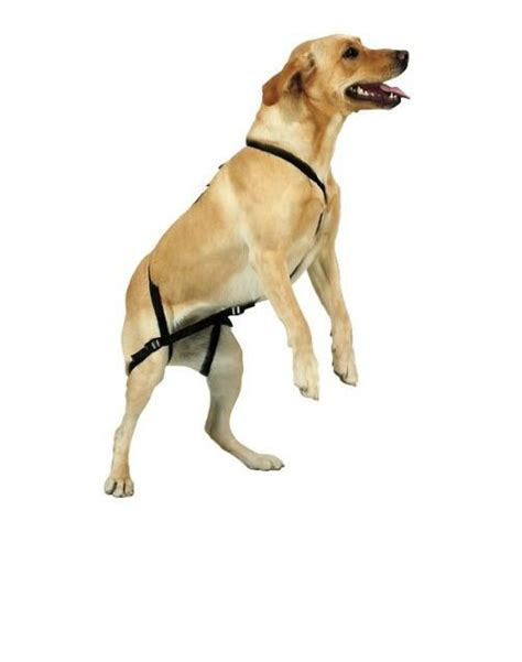 how to get a puppy to stop jumping no jump harness anti jump pet harness stop jumping ebay