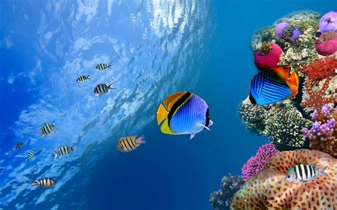 wallpaper hd underwater underwater desktop backgrounds wallpaper cave