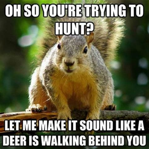 let me see you do the squirrel the internet s 14 cutest squirrel memes