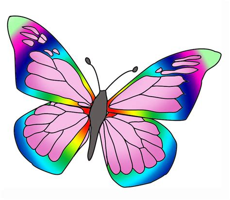 butterfly colors beautiful butterfly images