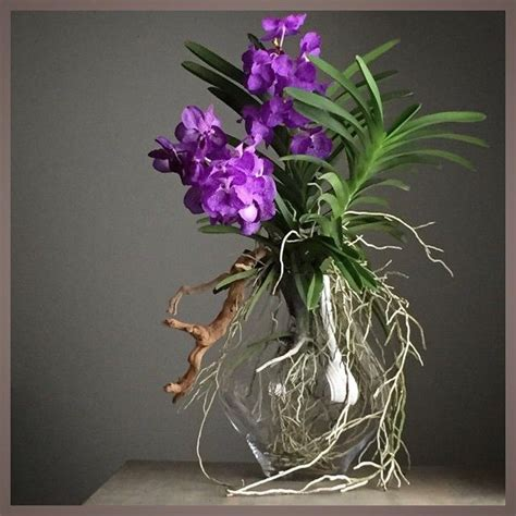 100 facts about orchids 6 incredible flowers that 364 best orchid and care images on pinterest growing