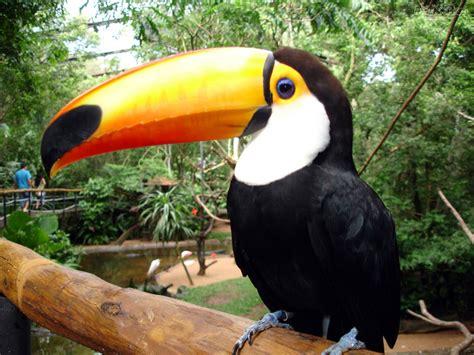 imagenes de aves asombrosas aves 191 qu 233 son las aves