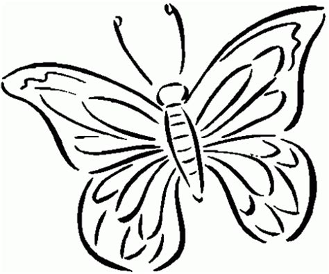 imagenes de mariposas para niños insectos elegantes