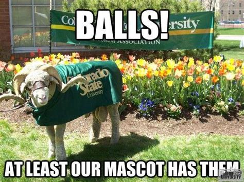 Rams Memes - rams memes 28 images csu memes pages ram these buffs