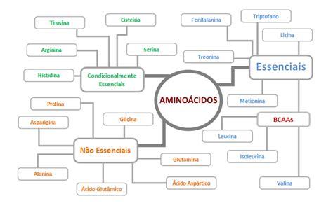 proteinas e amino cidos veja o guia completo de amino 225 cidos gr 225 tis