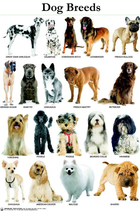 breeds and personalities breeds information characteristics and behavior dogalize