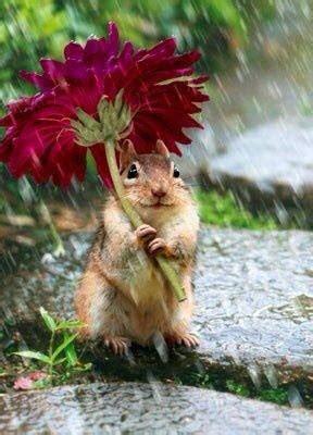 Flowe Funy flower umbrella squirrel picture