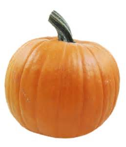 pumpkin pictures for existential interviews vol 24 daemon 1833 fm