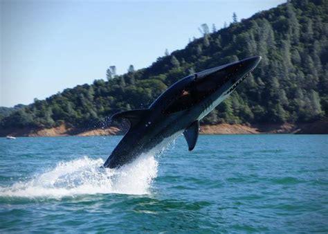 the shark names the submarine whale watching boat killin it boyhood dream