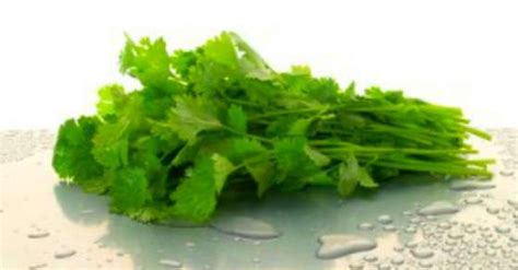 Cilantro Radiation Detox by What The Cancer Industry Does Not Want You To About