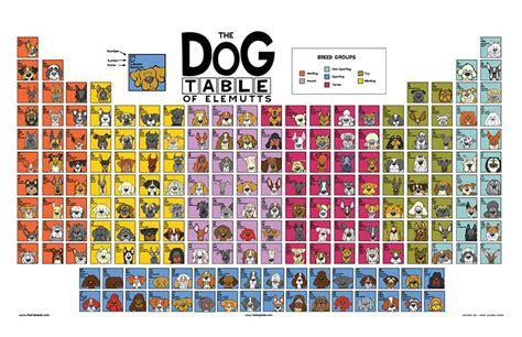 periodic table of dogs the table poster angry squirrel studio
