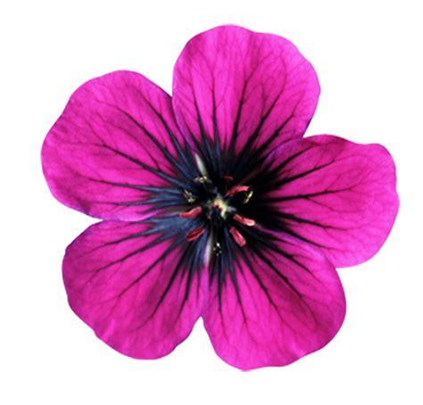 Flowers Pink pink flower weneedfun