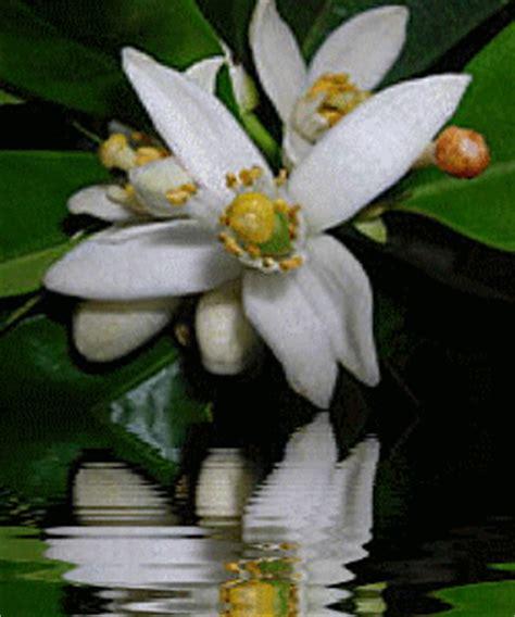 fiore d ditelo con i fiori
