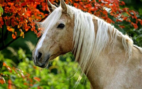 wallpaper for desktop of horses palomino horse backgrounds hd wallpaper high quality
