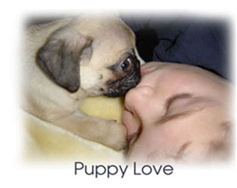 pug puppy care tips top family dogs top family dogs tips and resources breeds picture