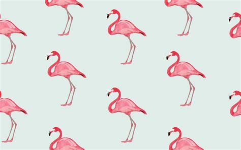 flamingo computer wallpaper desktop flamingo jpg 1856 215 1161 flamingos pinterest