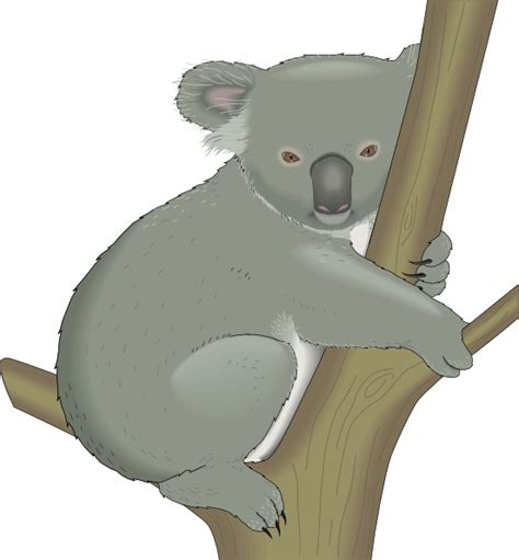 clipart koala koala in tree clip at clker vector clip